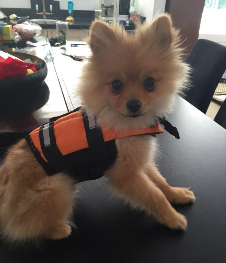 Jaket Pelampung Baju Renang Anjing Size M Green
