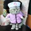 Baju Kucing Cat Funny Halloween Cosplay Size L - Pink