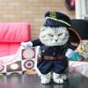 Baju Kucing Cat Funny Halloween Cosplay Size L - Black