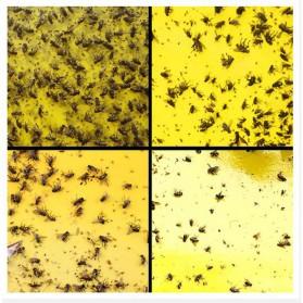 ISHOWTIENDA Lem Perangkap Nyamuk Lalat Glue Sticker Sticky Board Catching Aphids Insects 60PCS - HG059 - Yellow - 4