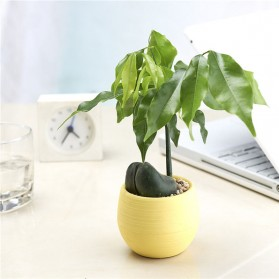 Mini Pot Bunga Hias Kaktus Tanaman - 5 PCS - Multi-Color - 5