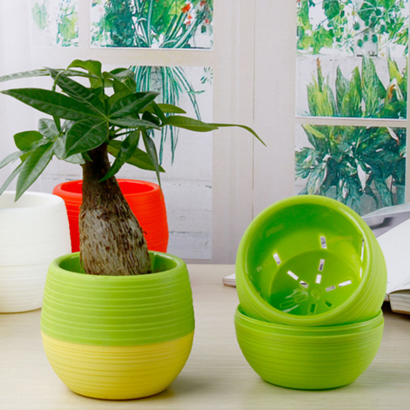 Mini Pot Bunga Hias Kaktus Tanaman 5 Pcs Multi Color