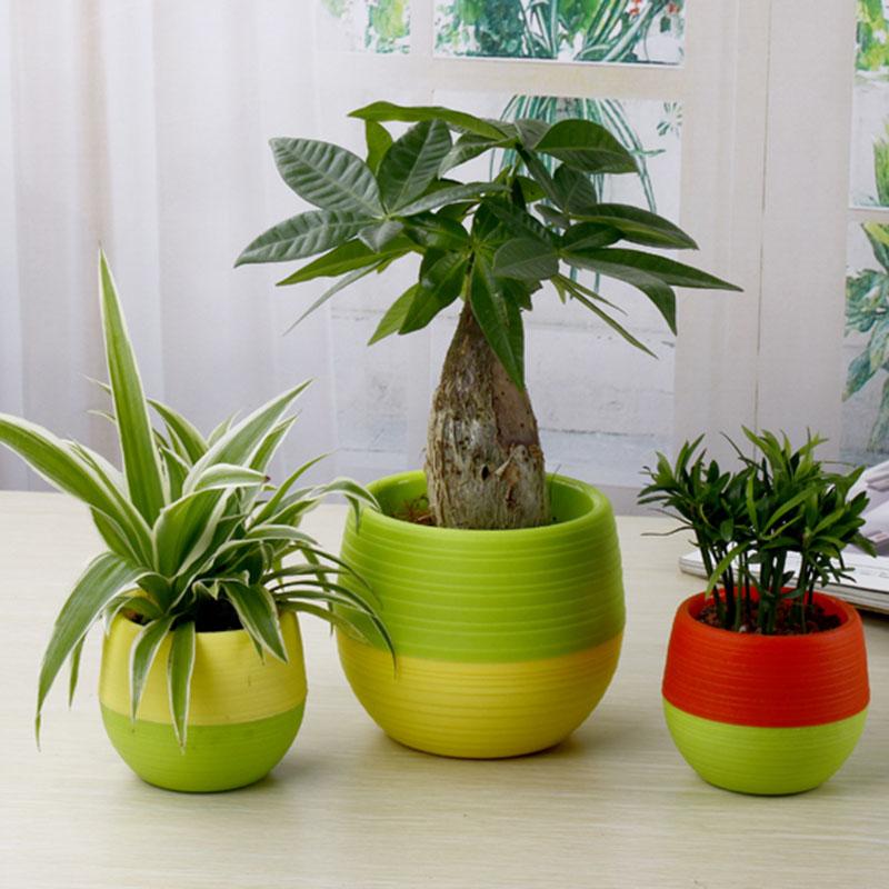 mini pot bunga hias kaktus tanaman 5pcs multi color. Black Bedroom Furniture Sets. Home Design Ideas