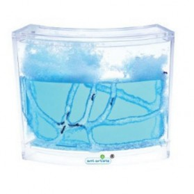 Aquarium Gel Ternak Semut Illuminated - Blue