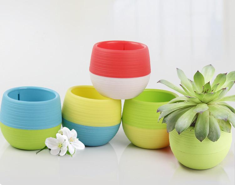 Mini Pot Bunga Hias Kaktus Tanaman 5 Pcs Multi Color