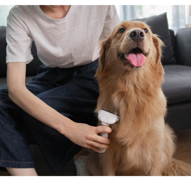 Pet Grooming - Anna Blog